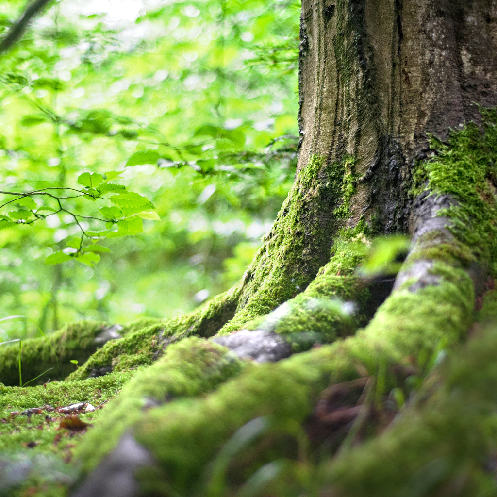 Praktijk Melilotus Natuurgeneeskunde | Pam Slaats