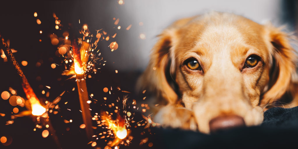 Vuurwerkangst bij honden, wat kun je daar aan doen?